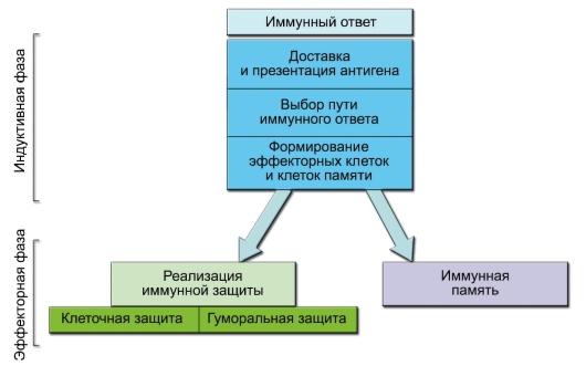 Механизм действия вакцин